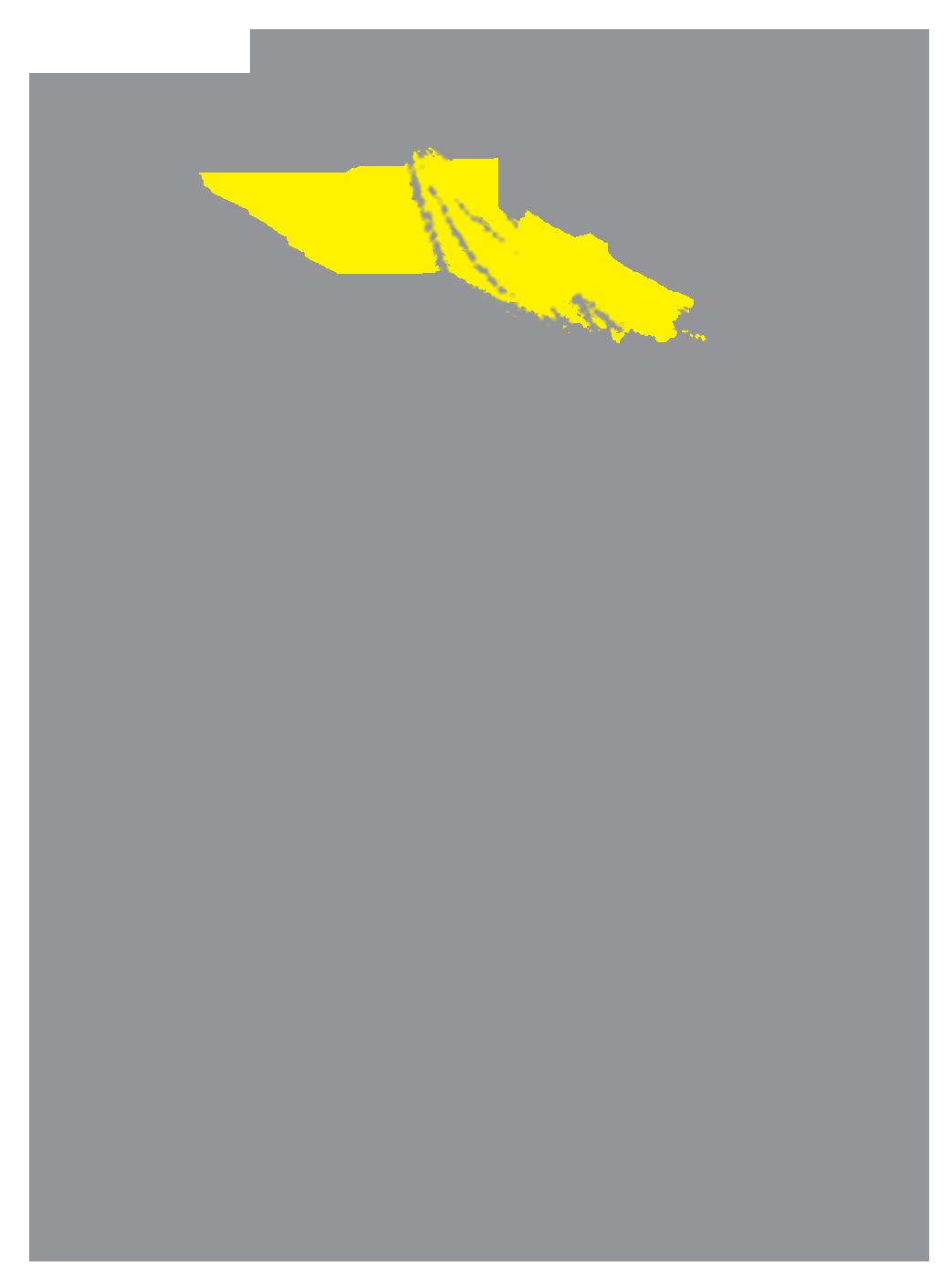 cocktail bird